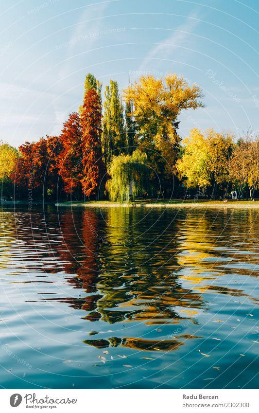 Herbstsaison in der Bukarester Parklandschaft Umwelt Natur Landschaft Pflanze Wasser Himmel Wetter Schönes Wetter Baum Wald Teich See schön natürlich blau