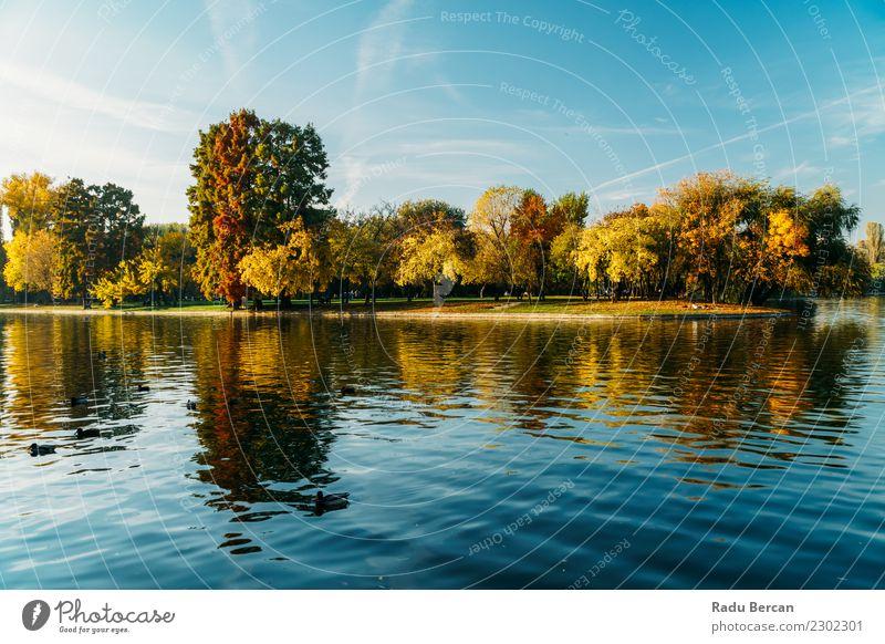 Herbstsaison in der Bukarester Parklandschaft Umwelt Natur Landschaft Wasser Himmel Wetter Baum Gras Wald Teich See schön natürlich blau mehrfarbig gelb grün