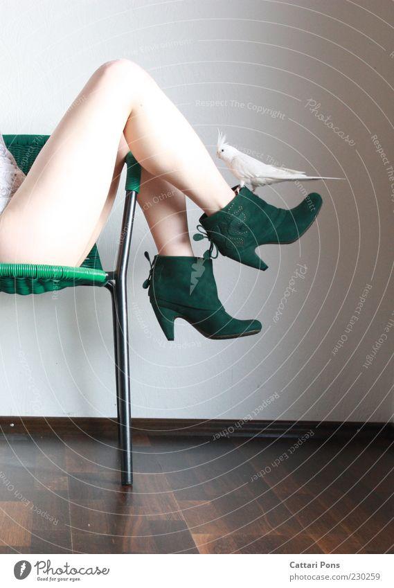 weiß & gruen Mensch feminin Junge Frau Jugendliche Erwachsene Beine 1 Mode Bekleidung Schuhe Damenschuhe Tier Haustier Vogel Nymphensittich Großsittich
