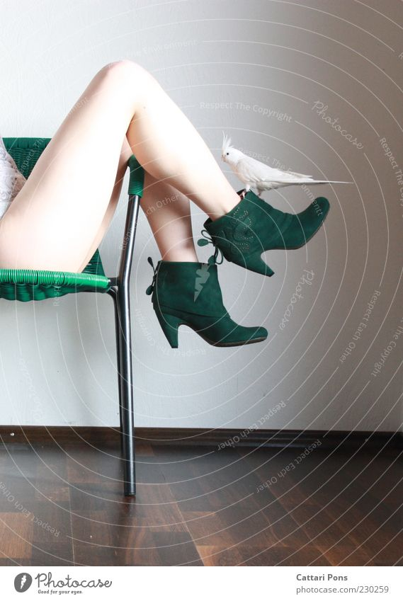 weiß & gruen Mensch Frau Jugendliche grün Tier Junge Frau Erwachsene feminin Beine Mode Vogel außergewöhnlich Schuhe sitzen Bekleidung