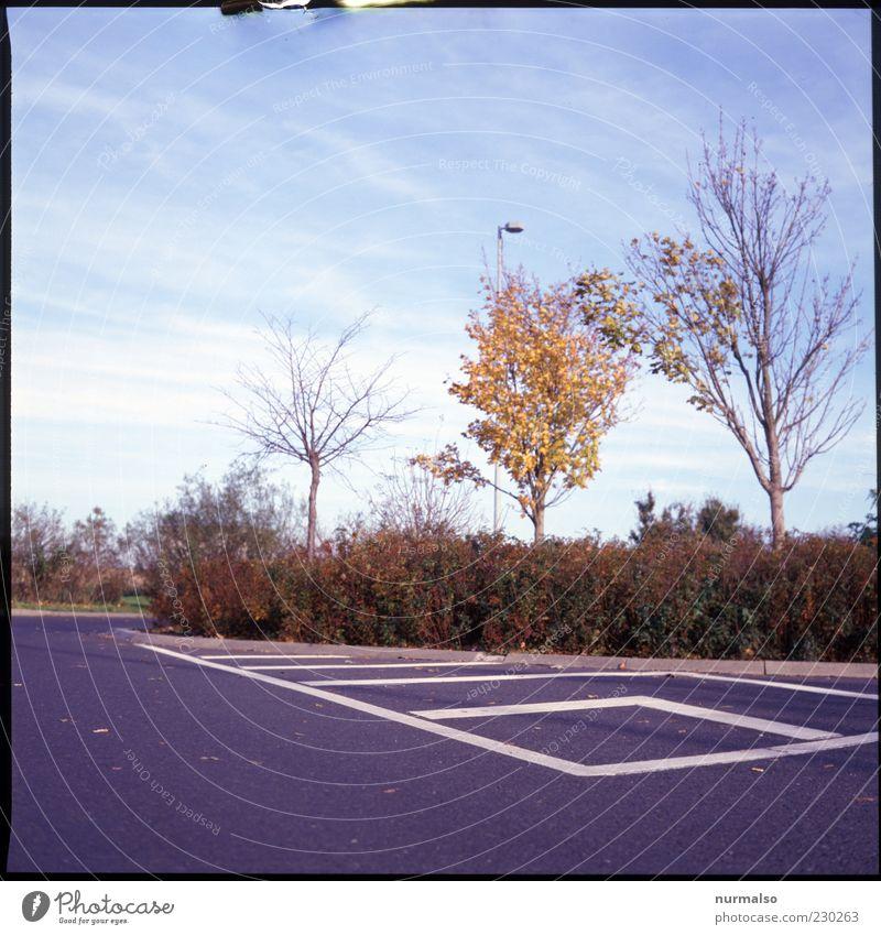 Herbstrast Umwelt Natur Himmel Schönes Wetter Baum Verkehr Verkehrswege Bordsteinkante Rastplatz Schilder & Markierungen Parkplatz Zeichen Verkehrszeichen