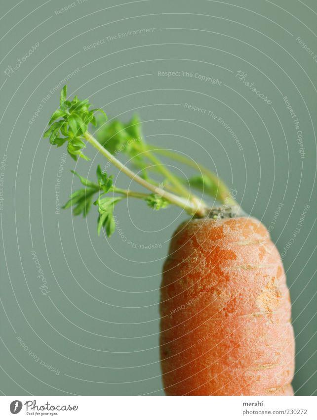 steile Friese Lebensmittel Gemüse Ernährung Bioprodukte grün Möhre orange Grünpflanze Gesundheit Farbfoto Innenaufnahme Hintergrund neutral Textfreiraum oben