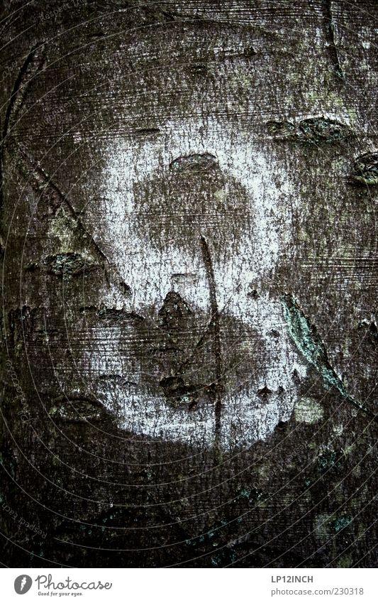 8 Wood Umwelt Natur Baum Park Holz Zeichen Ziffern & Zahlen wandern Baumrinde Schilder & Markierungen kennzeichnen weiß Farbstoff Farbfoto Außenaufnahme