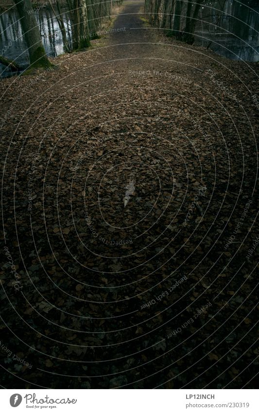 Forest trail Natur Blatt Wald Flussufer gehen wandern dunkel Traurigkeit Trauer Angst Fußweg Wege & Pfade Spazierweg Umwelt Düsterwald Farbfoto Außenaufnahme