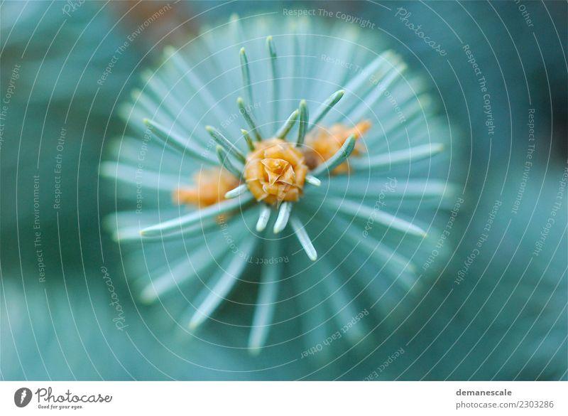 Kreisrund Natur Pflanze blau Sommer schön Farbe grün weiß Landschaft Baum Tier Leben gelb Umwelt Herbst Frühling