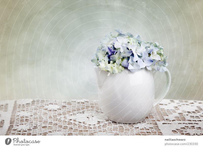 Stilleben mit Hortensien Dekoration & Verzierung Pflanze Frühling Blume Hortensienblüte Stillleben Vase Teekanne Stein Holz ästhetisch einfach elegant blau weiß