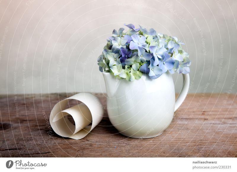 Stilleben mit Hortensien blau weiß Pflanze Blume Holz Stein braun elegant ästhetisch Dekoration & Verzierung einfach Stillleben Vase Pastellton Porzellan