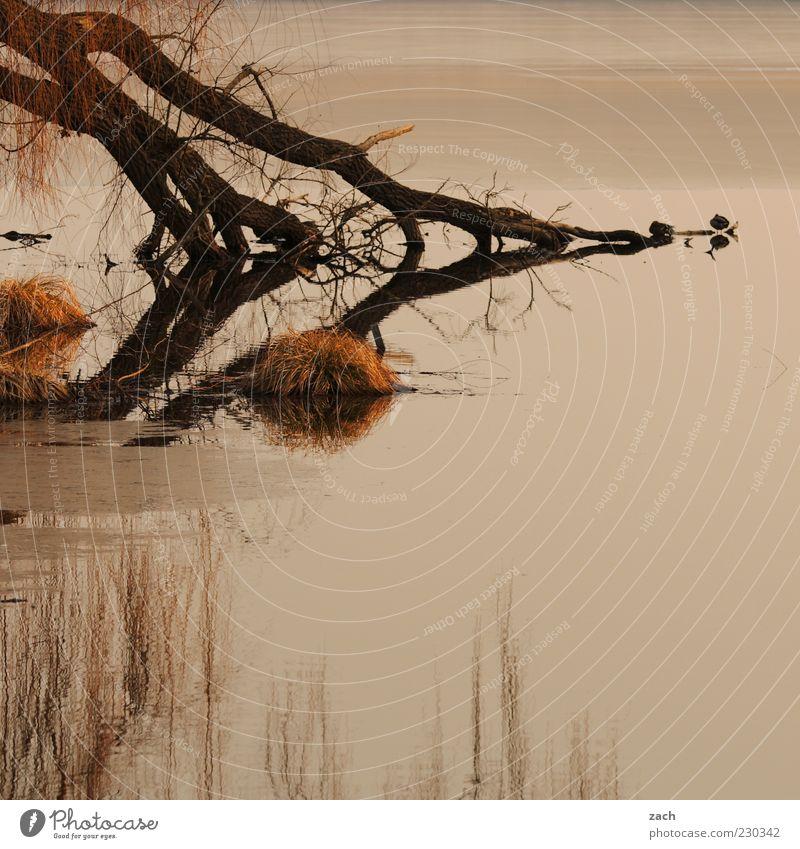 Brandenburg Natur Wasser Herbst Baum Gras Seeufer Teich Tier Vogel Erholung dunkel ruhig Einsamkeit Reflexion & Spiegelung Farbfoto Außenaufnahme Menschenleer