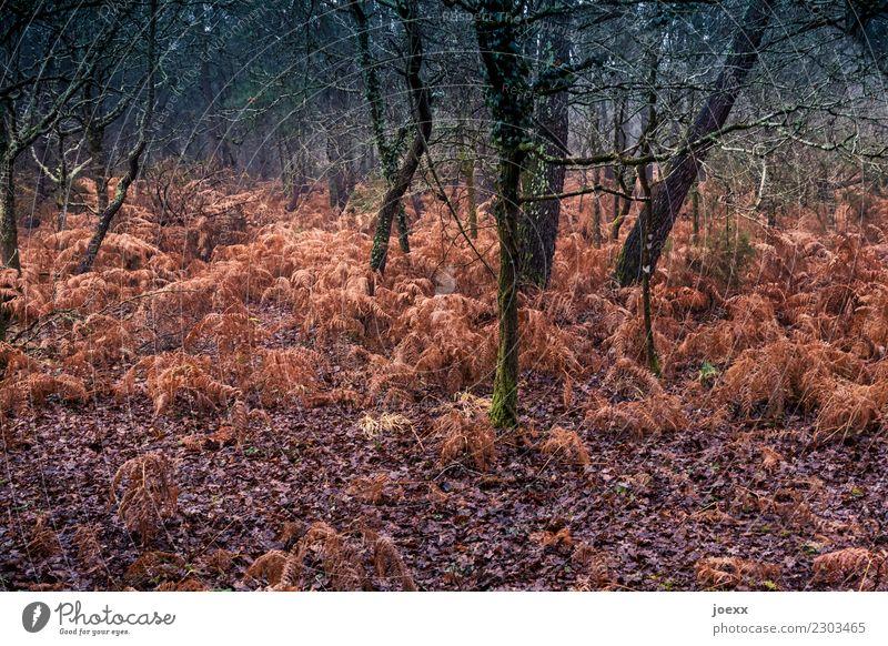 Rot wild Natur Herbst Wetter Baum Wald braun grün Farn Farbfoto Außenaufnahme Menschenleer Starke Tiefenschärfe