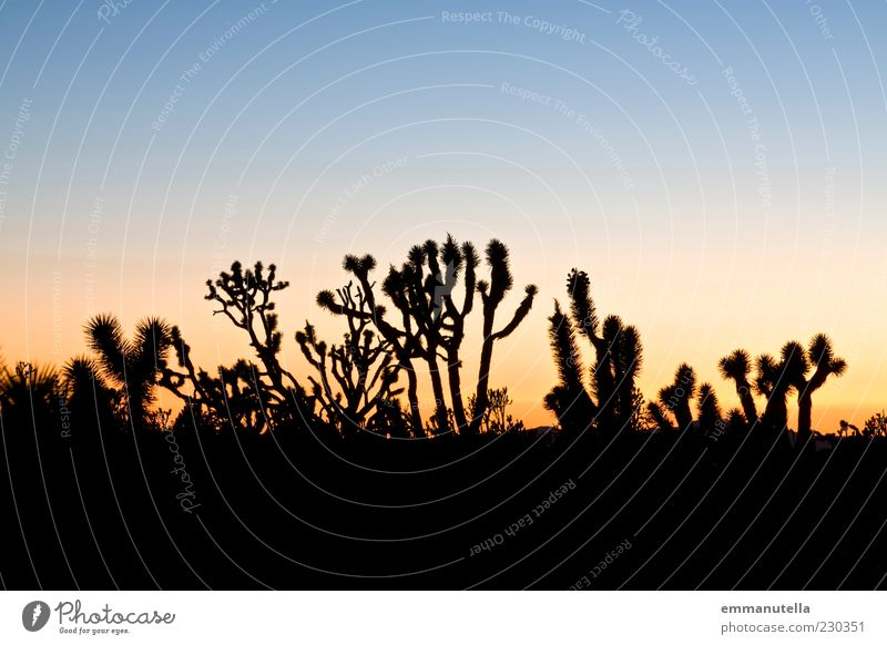 Mojave Desert, California, USA Mojave Wüste Kalifornien Stimmung Joshua Tree Kaktus Sonnenuntergang Farbfoto Außenaufnahme abstrakt Muster Menschenleer