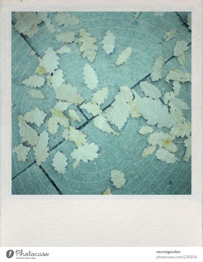 schräge entblätterung. blau Blatt Herbst Umwelt Wege & Pfade Linie Perspektive Wandel & Veränderung Vergänglichkeit Ende Bürgersteig Polaroid losgelöst Gedeckte Farben