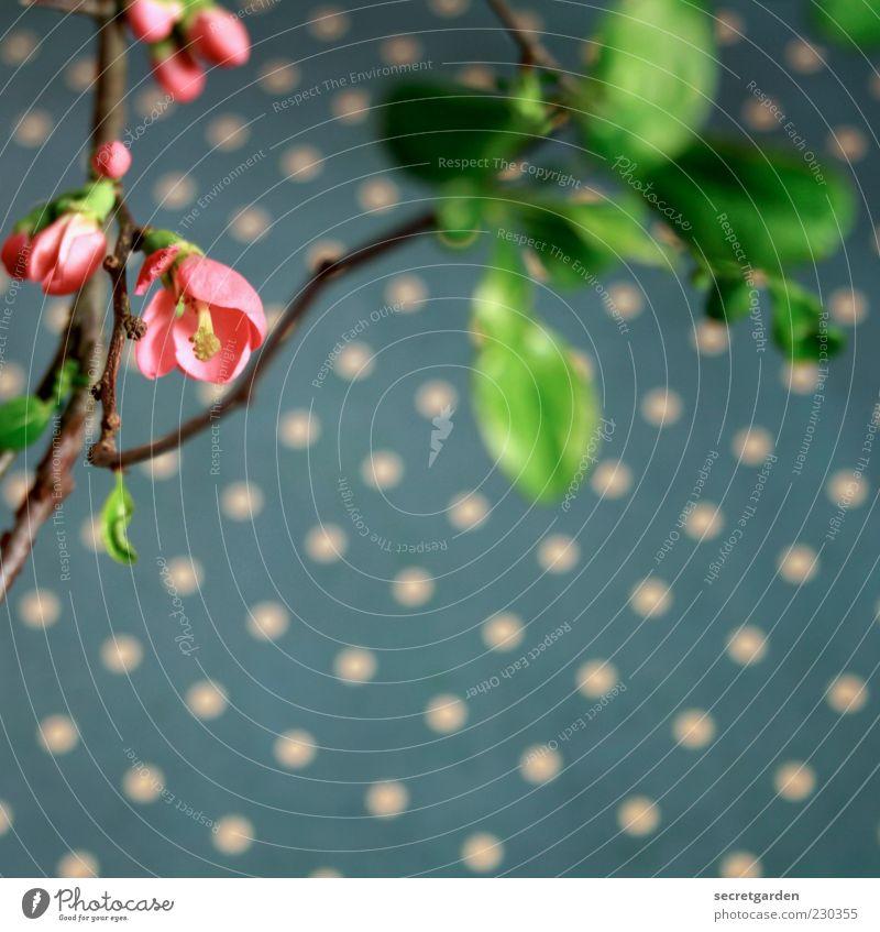 quittentapete. blau grün Pflanze Blume Blatt Blüte Frühling rosa Dekoration & Verzierung Vergänglichkeit Kitsch Punkt Blühend Tapete Zweig Nostalgie