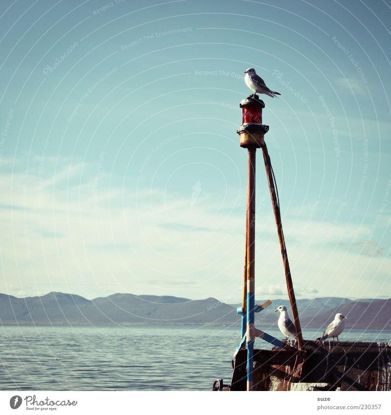Rundschau Freiheit Meer Umwelt Natur Himmel Schönes Wetter Küste Hafen Tier Wildtier Vogel 3 sitzen warten Möwe Aussicht Anlegestelle Farbfoto mehrfarbig