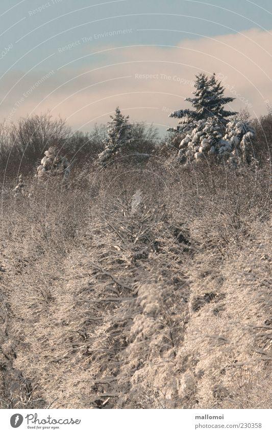 Winterzauber Himmel Natur blau Baum Winter ruhig Wald kalt Schnee Umwelt Landschaft Klima Frost einzigartig Tanne Schönes Wetter