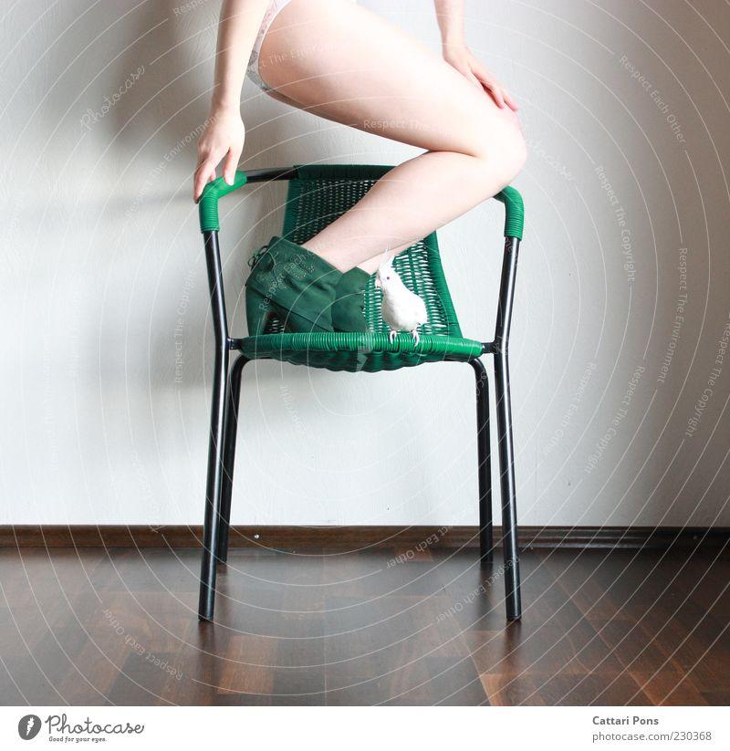 a cockatiel, a chair and shoes Mensch Frau Jugendliche grün weiß Hand Tier Junge Frau Erwachsene feminin Beine Vogel Zusammensein Schuhe sitzen Zufriedenheit