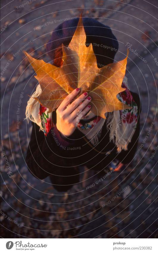 Märchen Frau Mensch Natur Blatt Erwachsene Herbst feminin Zufriedenheit groß festhalten geheimnisvoll Mütze verstecken zeigen anonym Stolz