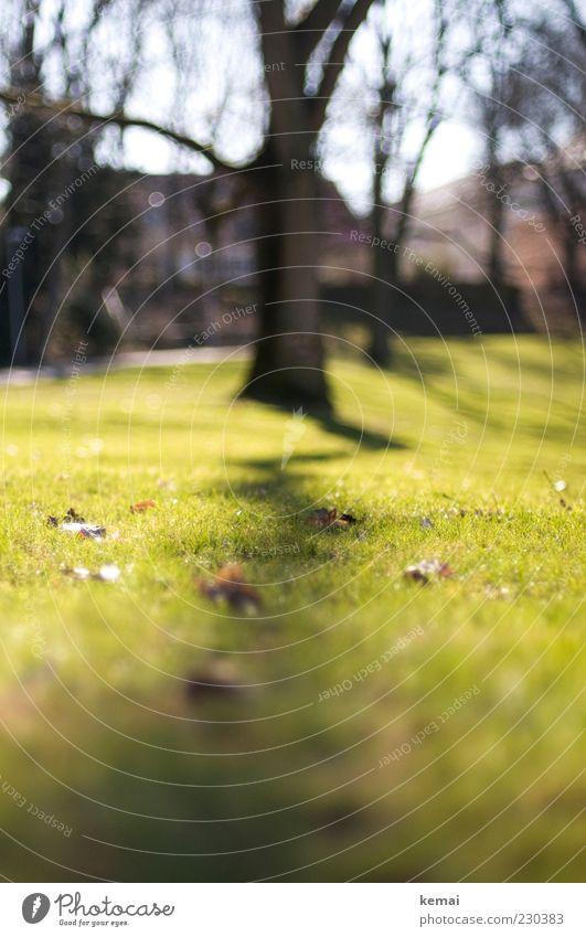 Zickzack Umwelt Natur Landschaft Pflanze Sonnenlicht Frühling Klima Schönes Wetter Baum Gras Blatt Baumstamm Park leuchten Wachstum hell grün Farbfoto