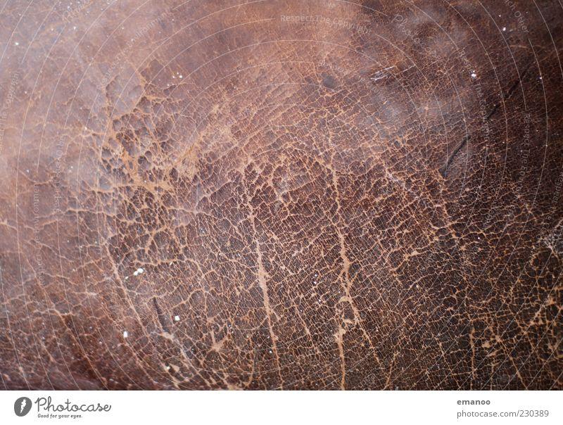 Turnkasten alt dunkel braun kaputt Stoff weich Tierhaut fest dick Kasten Riss Oberfläche Glätte Gerät Leder hart