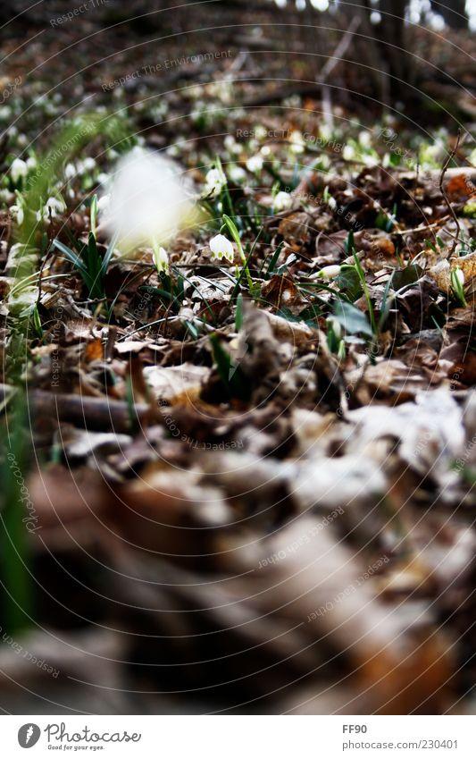Frühlingswald Natur Pflanze Blatt Blüte Frühling vertrocknet Waldboden Zweige u. Äste