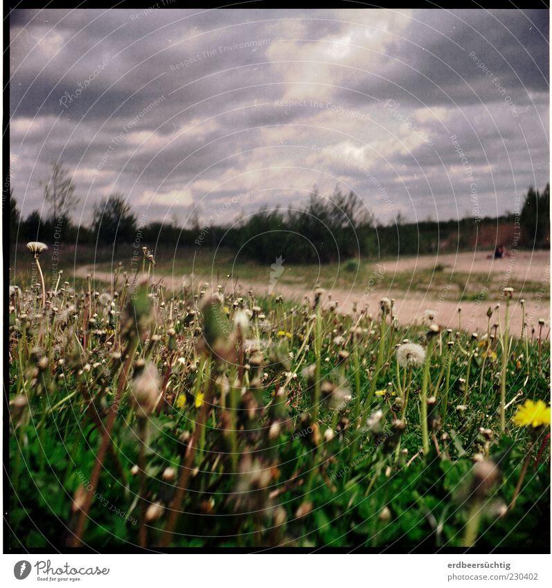 Renaturierung komplett Umwelt Natur Landschaft Pflanze Erde Sand Wolken Gewitterwolken Frühling Baum Blume Gras Sträucher Grünpflanze Löwenzahn Wiese