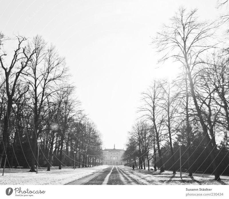 Garten Schönes Wetter Baum Haus Sehenswürdigkeit historisch Allee Park Dresden Schnee Blendenfleck Winter kalt Schwarzweißfoto Außenaufnahme Dämmerung