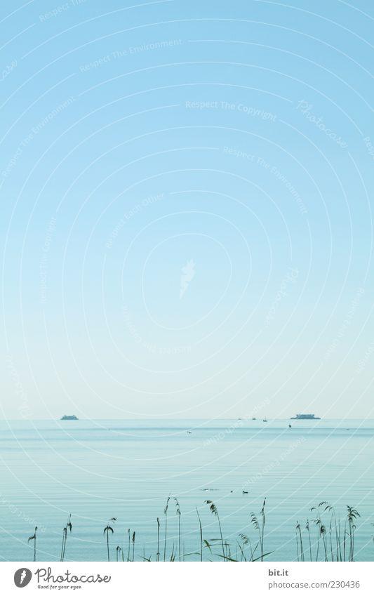 Bodensee Natur Landschaft Wasser Himmel Sommer Sträucher Wellen Seeufer nass blau Wasserfahrzeug Schilfrohr Wellengang Farbfoto Außenaufnahme Menschenleer