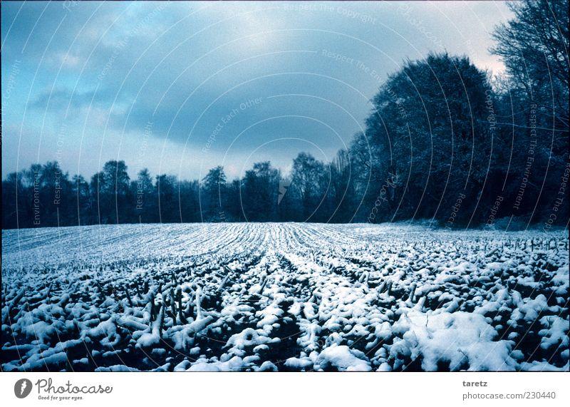 Winteracker schlechtes Wetter Feld kalt Wolken gerade Spuren Waldrand ruhig Winterschlaf friedlich Saison Landschaft Landwirtschaft Farbfoto Außenaufnahme