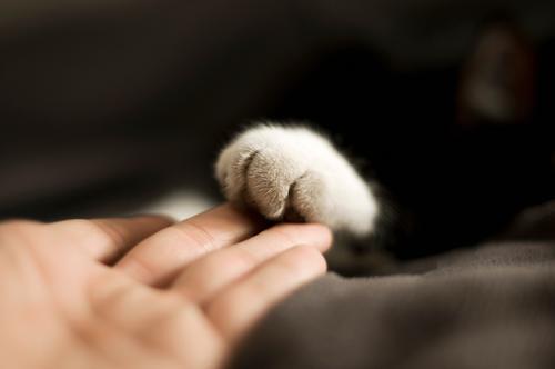 Zwei Pfoten Mensch Freundschaft Hand Finger 1 Tier Haustier Katze Freundlichkeit weich Vertrauen Sympathie Zusammensein Tierliebe vertraut Farbfoto