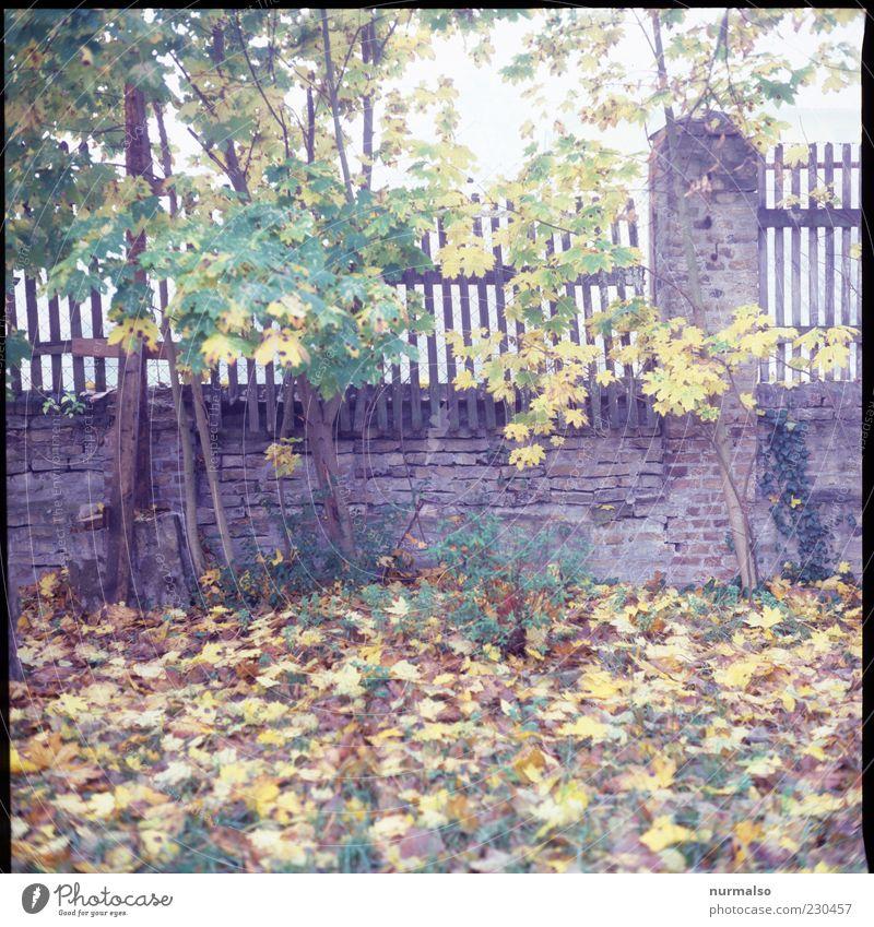 Geheimnisvoll Natur Herbst Blatt Mauer Wand nass natürlich wild Stimmung Umwelt Zaun lattenzaun Morgen herbstlich Wiese Herbstlaub Holzzaun Menschenleer