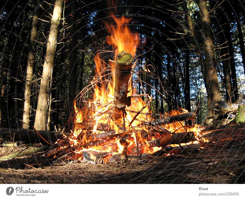 firestarter Baum Sommer Wald Holz Feuer brennen Feuerstelle
