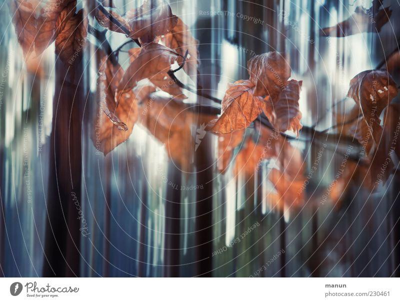 flash player Natur Baum Blatt Wald Herbst Bewegung braun außergewöhnlich Zweig bizarr Herbstlaub Surrealismus herbstlich Silhouette Bewegungsunschärfe