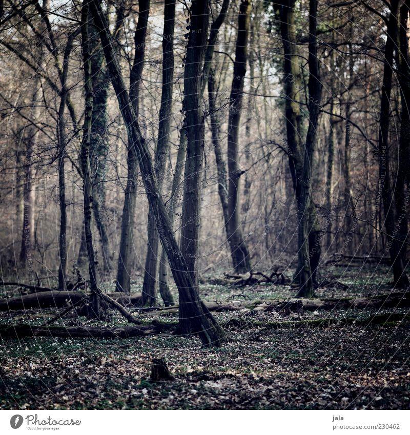 wald Natur Baum Pflanze Blatt Wald Landschaft Baumstamm herbstlich Herbstwald Düsterwald