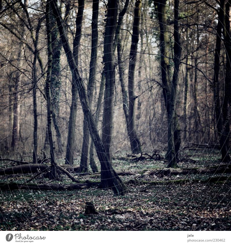 wald Natur Landschaft Pflanze Baum Wald Baumstamm Blatt Farbfoto Außenaufnahme Menschenleer Licht Schatten Düsterwald herbstlich Herbstwald