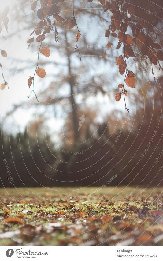 Herbst Nachmittag Natur Landschaft Sonne Sonnenlicht Baum Park Wiese Herbstlaub Blatt hell natürlich braun gelb Zufriedenheit ruhig Farbfoto Außenaufnahme