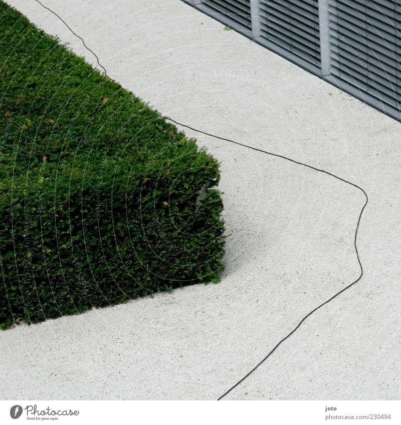 Kabel Garten Park Menschenleer Architektur Mauer Wand Terrasse Genauigkeit Sträucher Hecke Design puristisch Linie Schnur schlangenförmig Wege & Pfade