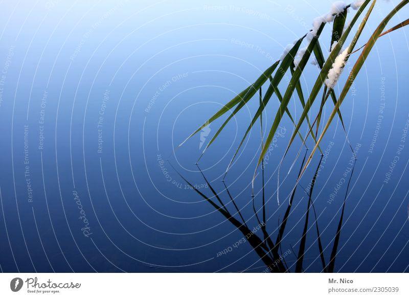 berührend Umwelt Natur Winter Pflanze Teich See Fluss ruhig Wasser Wasseroberfläche Wasserspiegelung blau außergewöhnlich Reflexion & Spiegelung zart Schatten