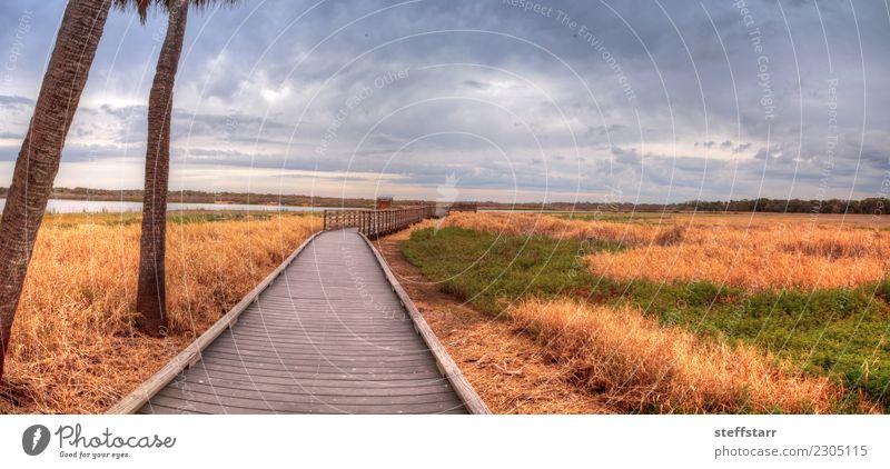 Boardwalk entlang des Feuchtgebietes am Myakka River State Park Natur Pflanze blau grün Landschaft Baum ruhig gelb Wege & Pfade Gras braun Ausflug gold USA