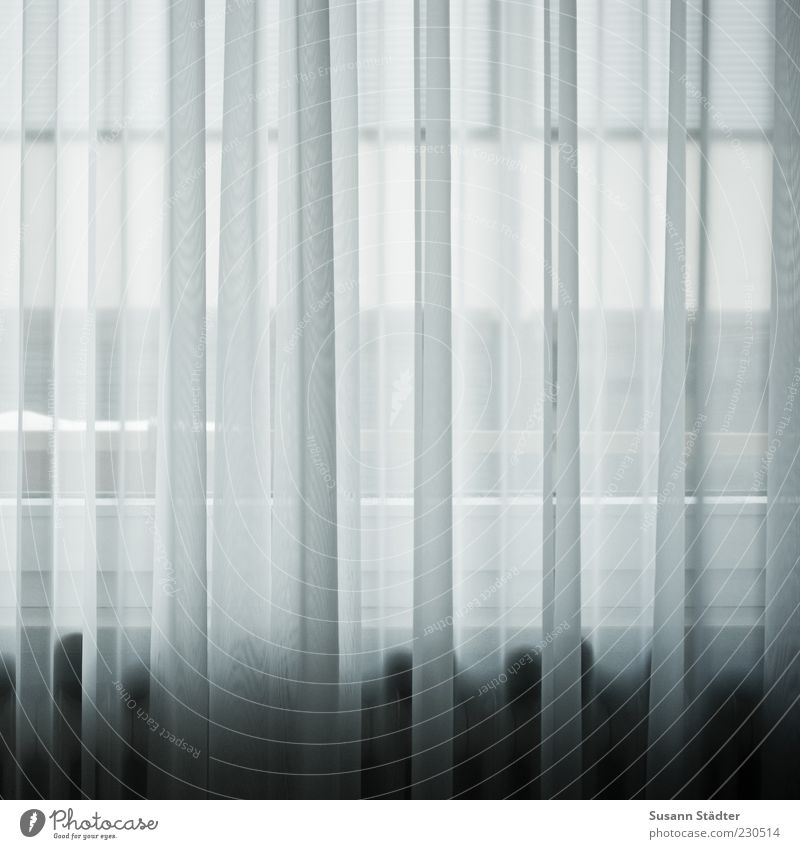 remember Wohnung Dekoration & Verzierung Gardine Fenster Fensterbrett Vorhang weiß Gedeckte Farben Nahaufnahme Detailaufnahme Totale Menschenleer Sichtschutz