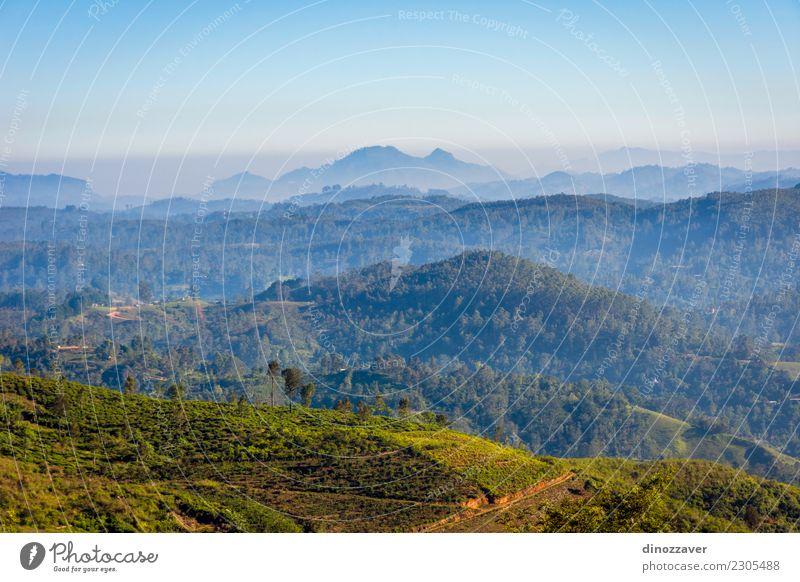 Zentrale Sri Lanka Landschaft Ferien & Urlaub & Reisen Sommer Berge u. Gebirge Umwelt Natur Pflanze Himmel Baum Hügel Wachstum frisch grün Schonung Asien Feld
