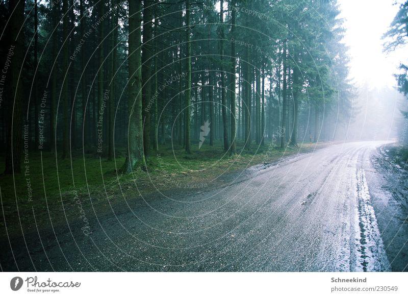 Licht am Ende.... Natur grün Baum Pflanze Wald Straße Umwelt Landschaft Wege & Pfade Luft hell Regen nass viele Baumstamm Baumkrone