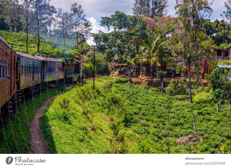 Per Zug über Teeplantagen, Sri Lanka schön Ferien & Urlaub & Reisen Tourismus Sommer Berge u. Gebirge Natur Landschaft Wald Hügel Verkehr Eisenbahn grün ella