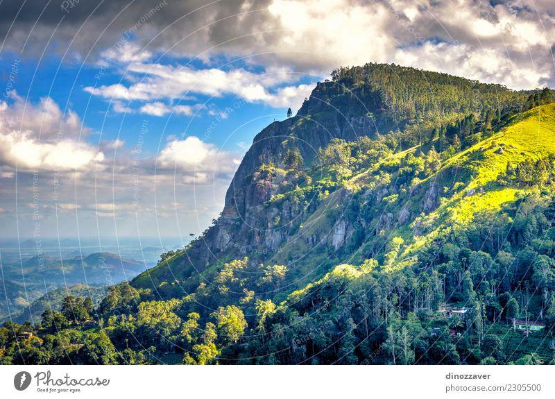 Ella-Felsen, Sri Lanka Tee schön Ferien & Urlaub & Reisen Tourismus Sommer Berge u. Gebirge wandern Natur Landschaft Himmel Wolken Baum Wald Urwald Hügel