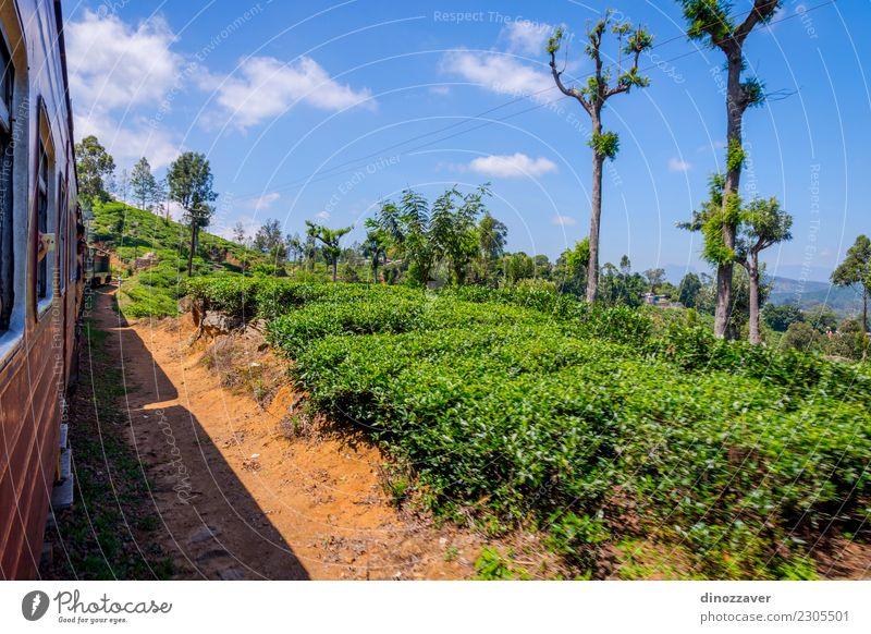 Mit dem Zug über Teeplantage, Sri Lanka Natur Ferien & Urlaub & Reisen Sommer schön grün Landschaft Wald Berge u. Gebirge Tourismus Verkehr offen Aussicht