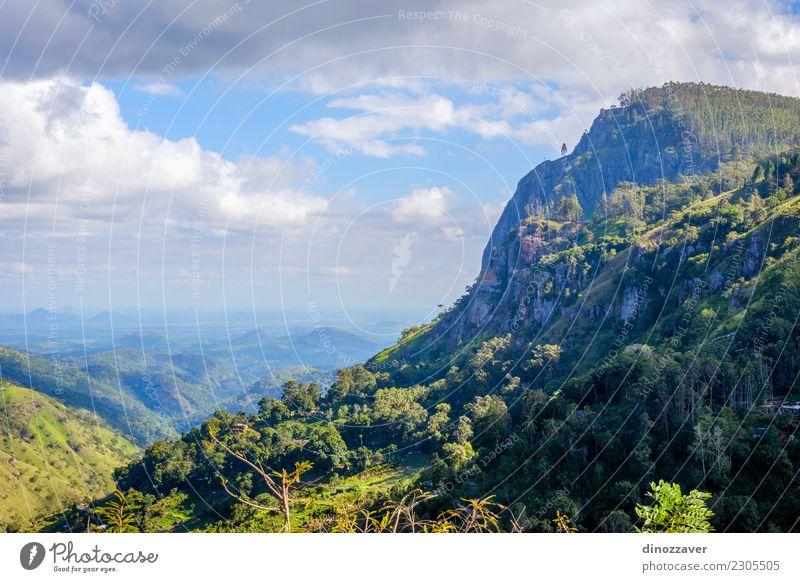 Ella Rock, Sri Lanka Tee schön Ferien & Urlaub & Reisen Tourismus Sommer Berge u. Gebirge wandern Natur Landschaft Himmel Wolken Baum Wald Urwald Hügel Felsen