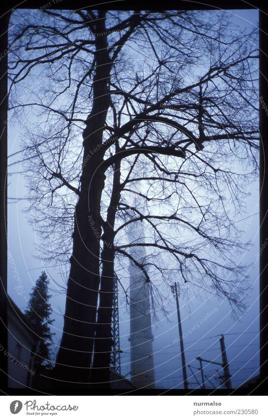 Industrie Natur Baum Winter kalt dunkel Umwelt Stil Traurigkeit träumen Nebel authentisch Wandel & Veränderung trist Ast Fabrik gruselig