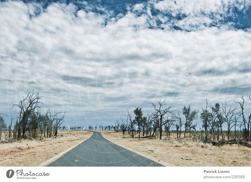 This is nowhere Umwelt Natur Landschaft Pflanze Urelemente Erde Luft Himmel Wolken Sonnenlicht Klima Klimawandel Wetter Schönes Wetter Baum Sträucher