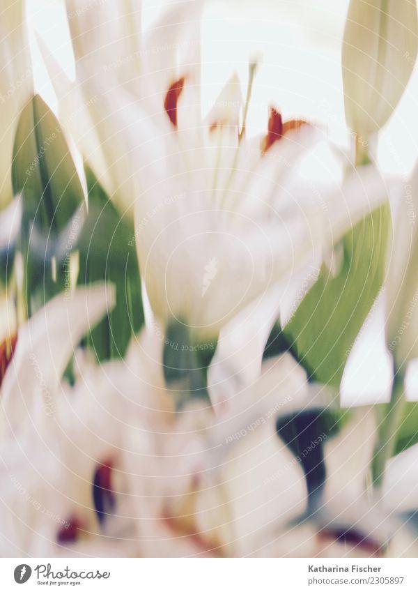 Lily was here. I Kunst Kunstwerk Gemälde Natur Pflanze Frühling Sommer Herbst Winter Blume Blatt Blüte exotisch Blühend schön grün orange rot türkis weiß