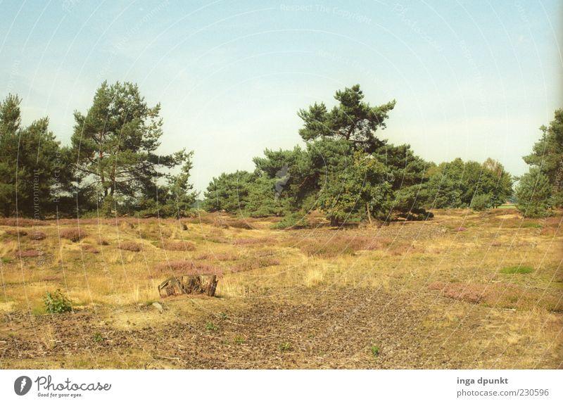 Spätsommernachmittag Natur Baum Pflanze Sommer Erholung Herbst Wiese Umwelt Landschaft Gras Deutschland Zufriedenheit ästhetisch Sträucher Schönes Wetter