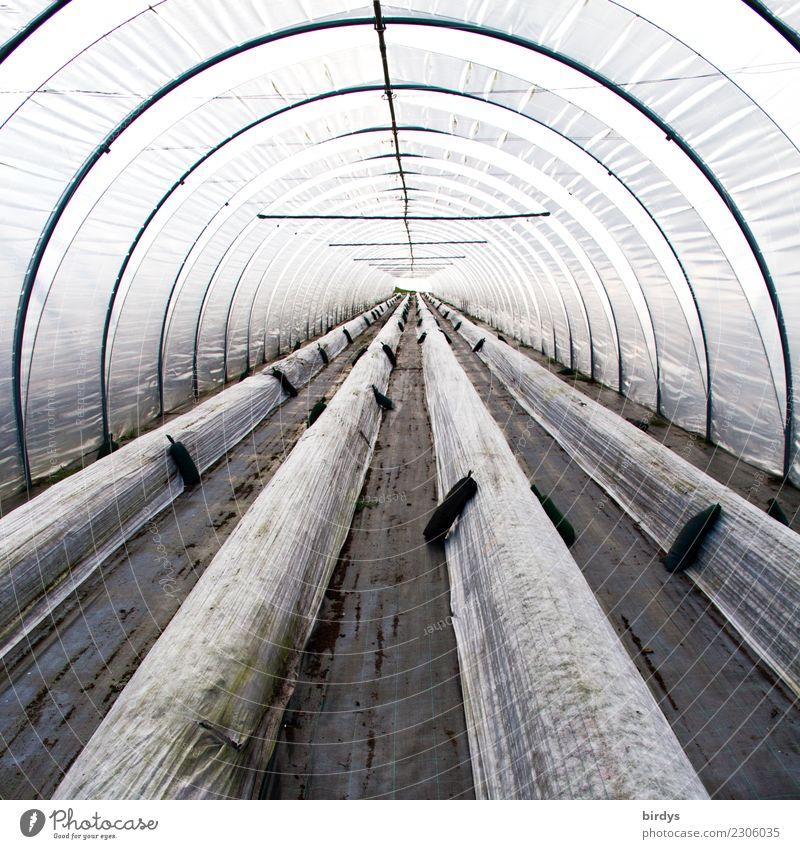Im Folientunnel Ernährung Gärtner Arbeitsplatz Gewächshaus Landwirtschaft Forstwirtschaft Nutzpflanze Tunnel Folienbeet Kunststoff authentisch lang rund grau