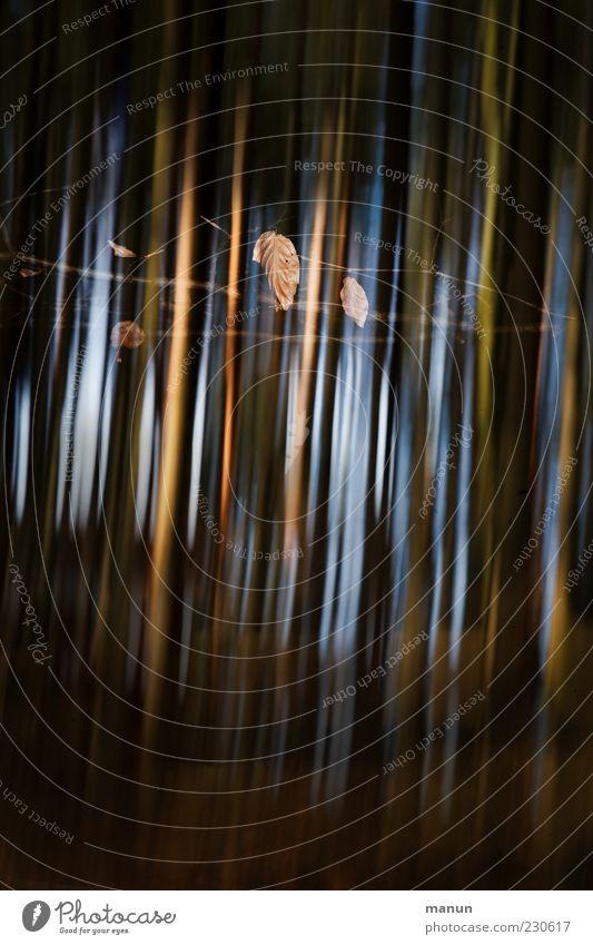 Streifendesign Natur Blatt außergewöhnlich Originalität Farbfoto Außenaufnahme Experiment abstrakt Menschenleer Tag Blitzlichtaufnahme Licht Schatten Kontrast